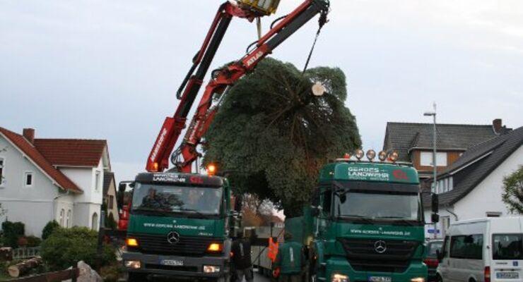 Ein Weihnachtsbaum fährt nach Berlin