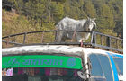 Lkw-Fahren in Nepal, Passagiergut, Ziege