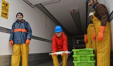 Report Reportage Irland Fischtransport