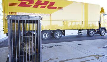 Transport der Braunbären durch DHL