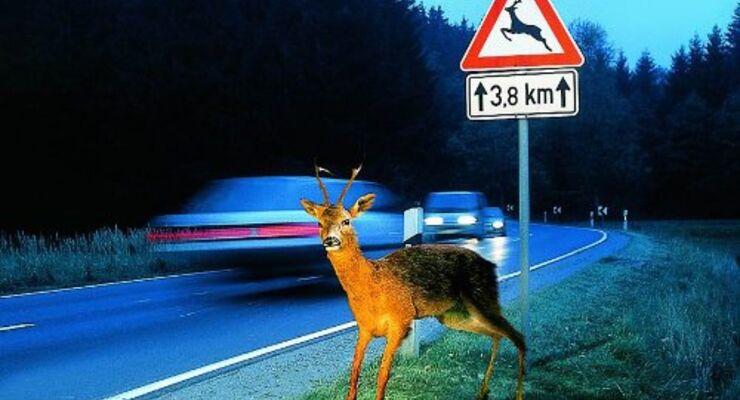 Vorsicht bei Wildwechsel!